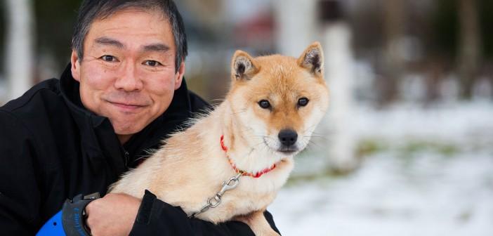 hokkaido dog - Niseko