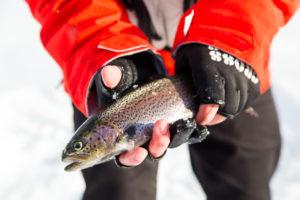 Big fight Fishing-2361