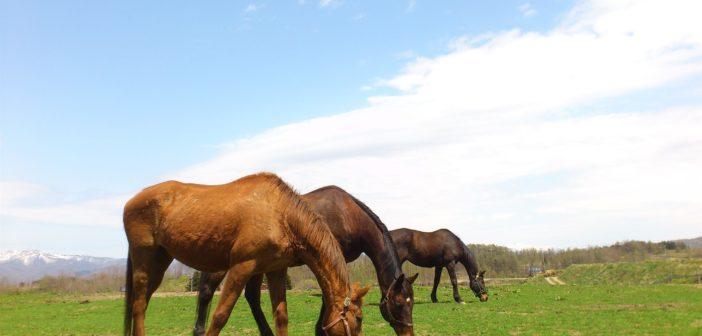Long Island Equine Jobs