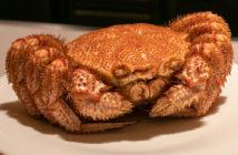 Sushi Kato Hairy Crab